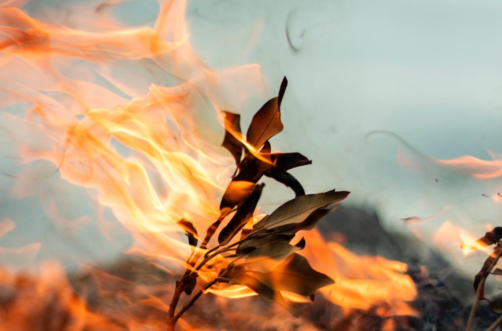 Forest fire leaves branch Photo by Alfred Kenneally on Unsplash