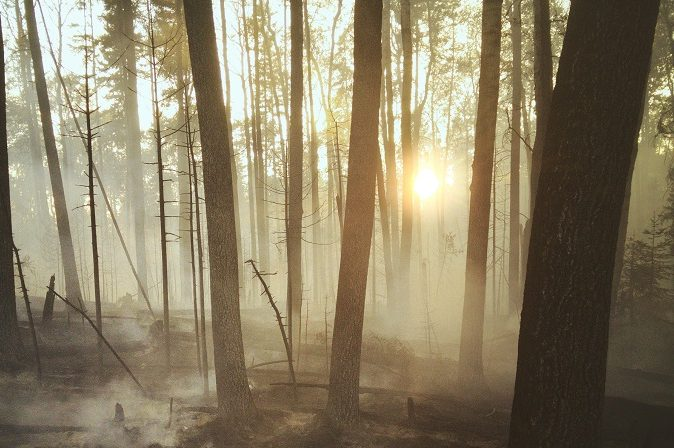 Forest fire smoke trees