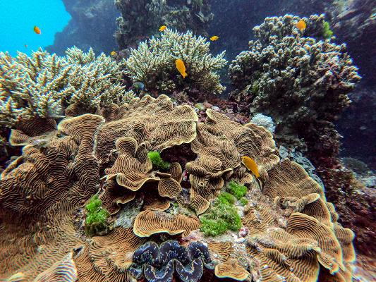 Great Barrier Reef Photo by Daniel Pelaez Duque on Unsplash 400x