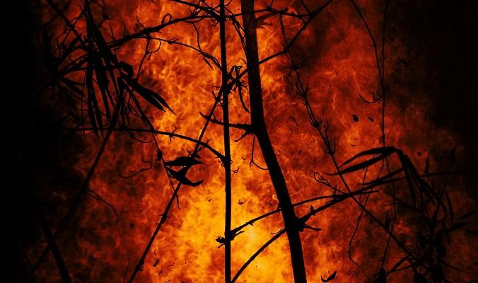 Fire forest fire original Photo by Benjamin Lizardo on Unsplash