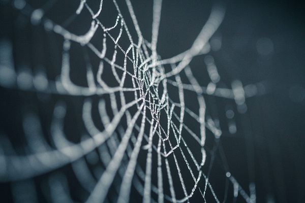 Web spider web